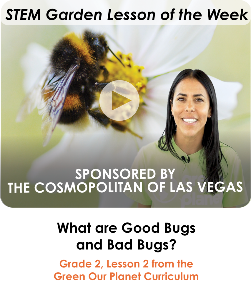2.2 What are Good Bugs and Bad Bugs_ (Lesson of the Week) (1)