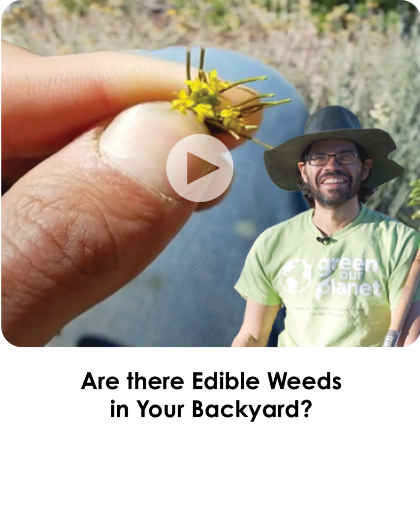 Are there Edible weeds in Your Backyard