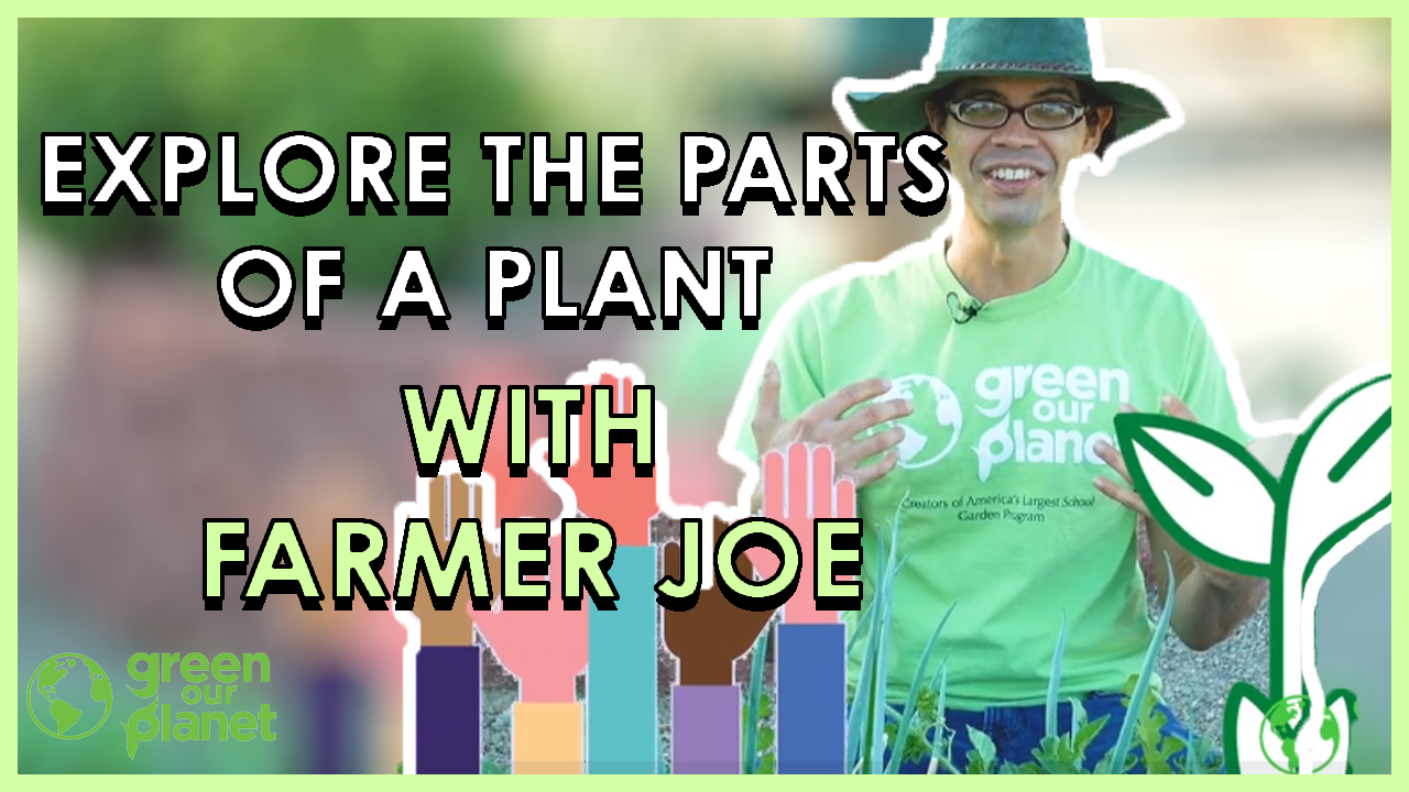 Explore-the-parts-of-a-plant-with-Farmer-Joe-1