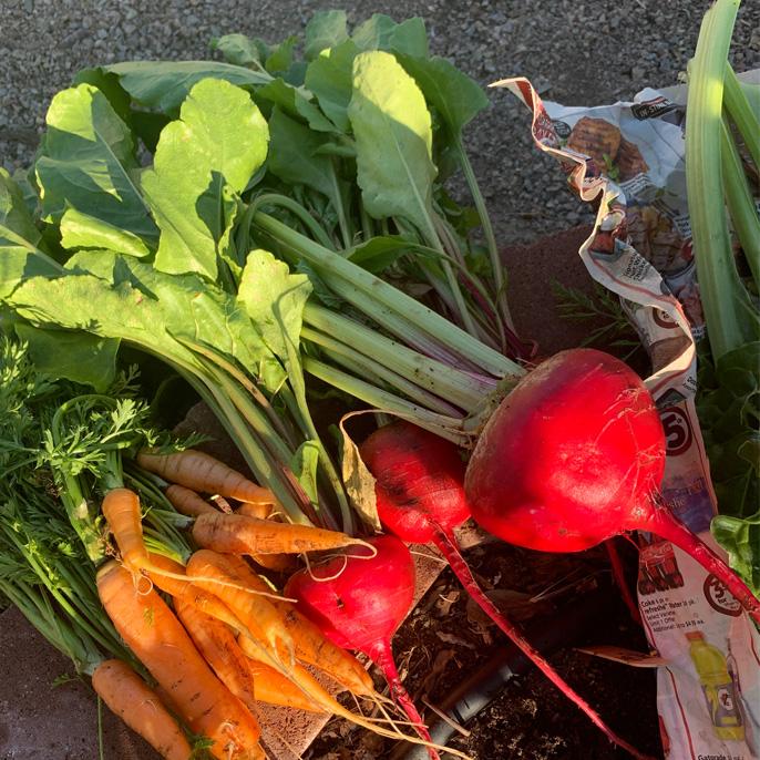 vegetables grown in a classroom garden