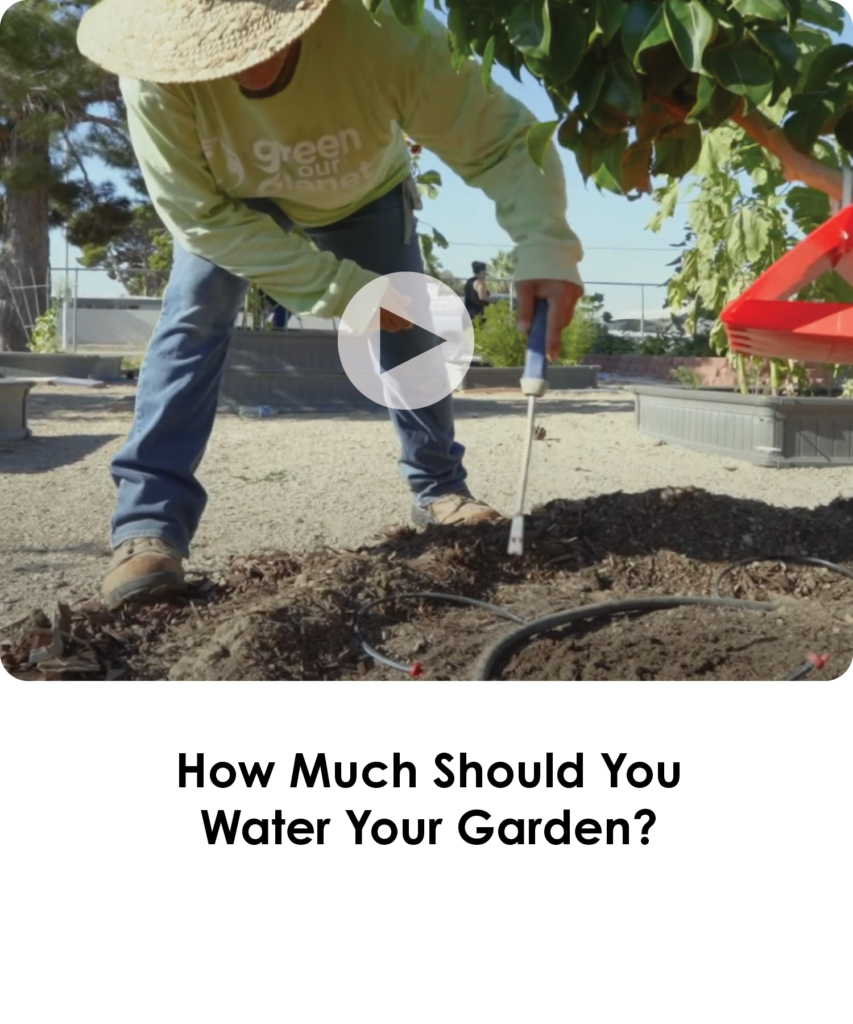 How much should you water your garden