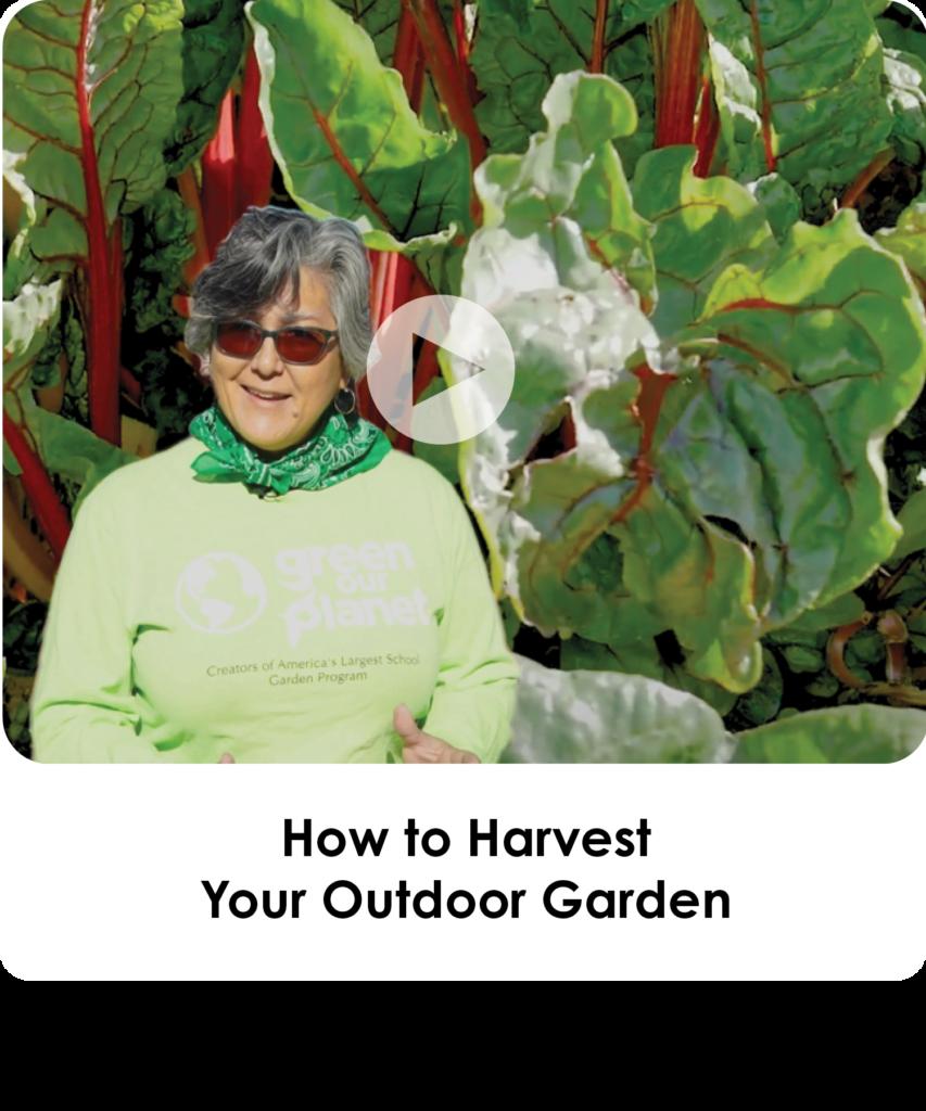 How to Harvest Your Outdoor Garden
