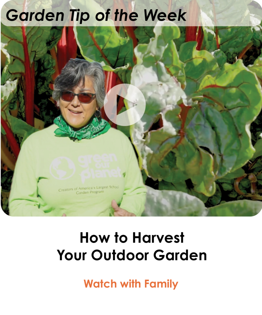 How-to-Harvest-Your-Outdoor-Garden-Lesson-of-the-Week