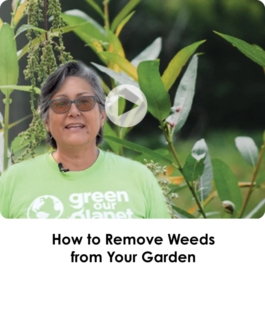 How to Remove Weeds from your Garden
