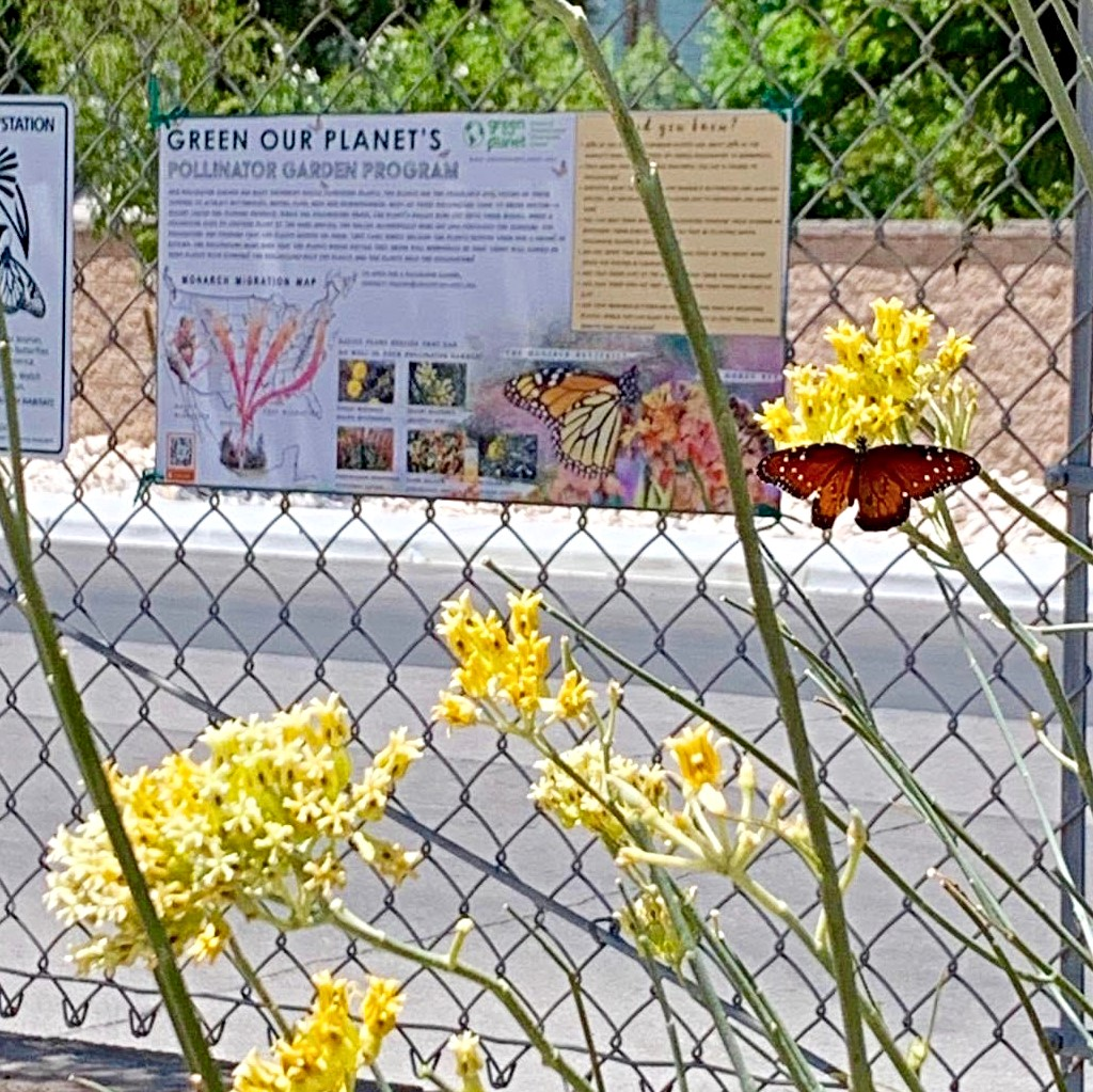 Monarch and sign (square)