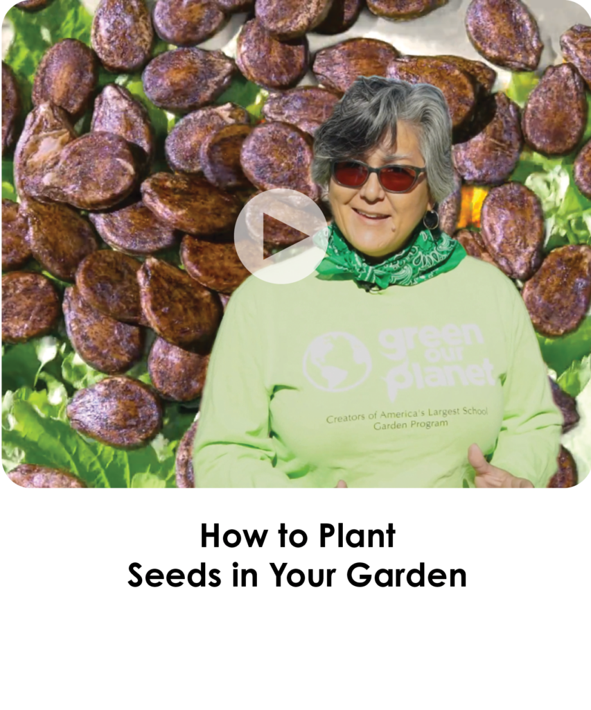 How to Plant Seeds in Your Garden