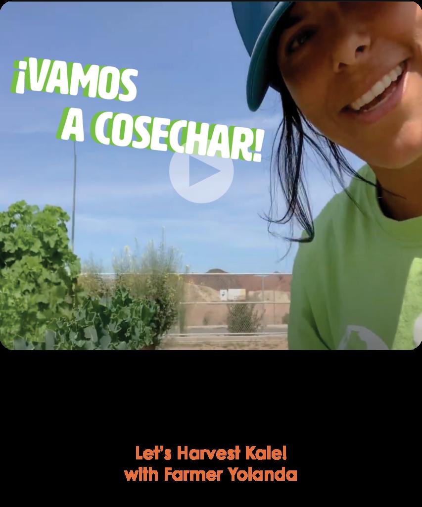 Harvesting Kale in Spanish