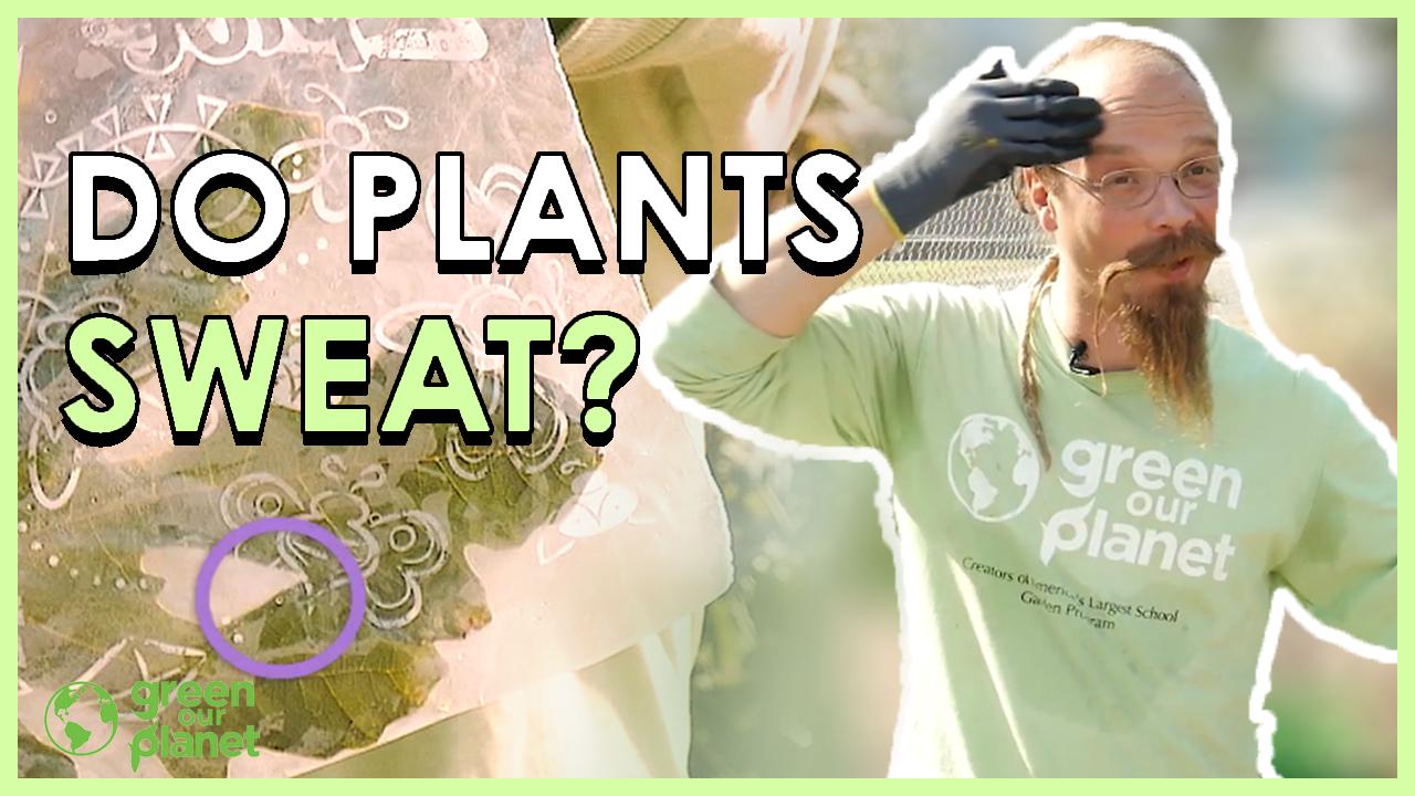 do-plants-sweat