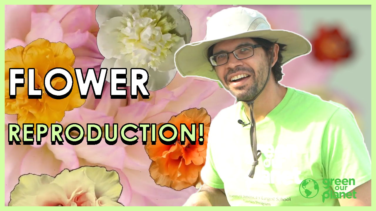 flower-reproduction-1