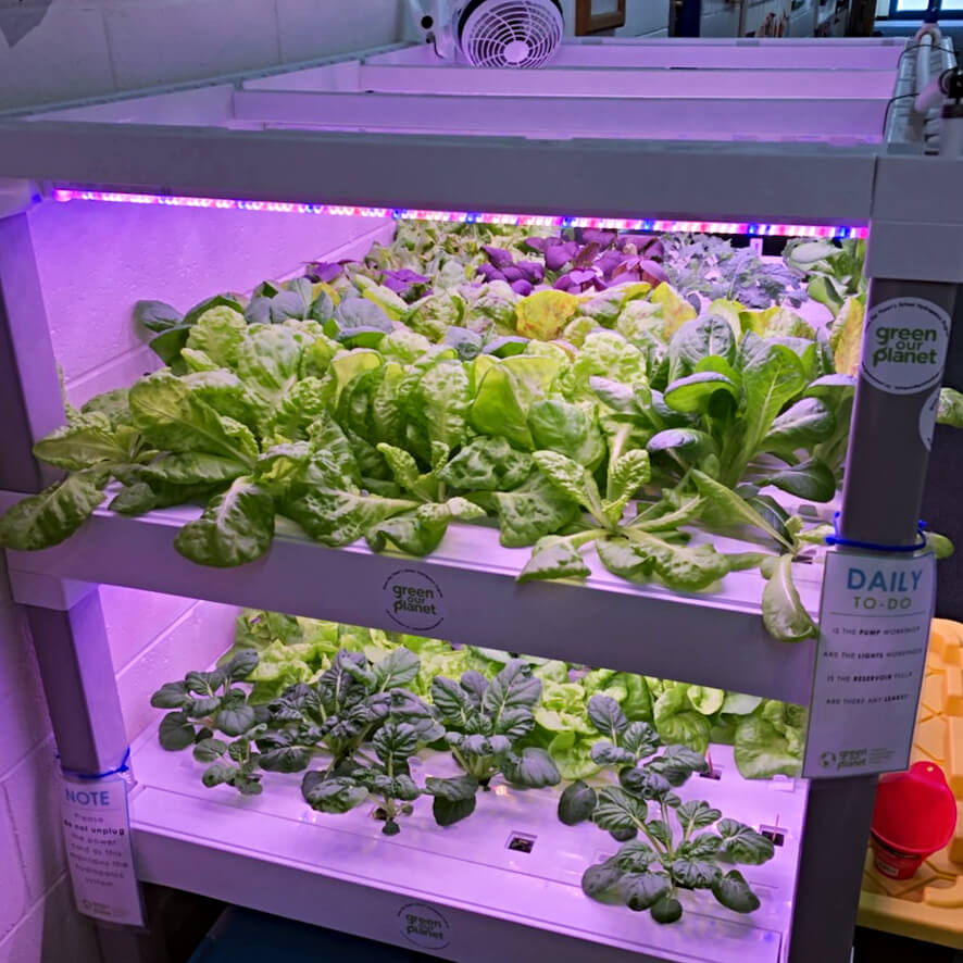 hydroponics produce more
