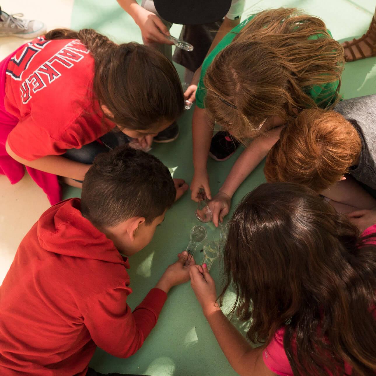 hydroponics school program