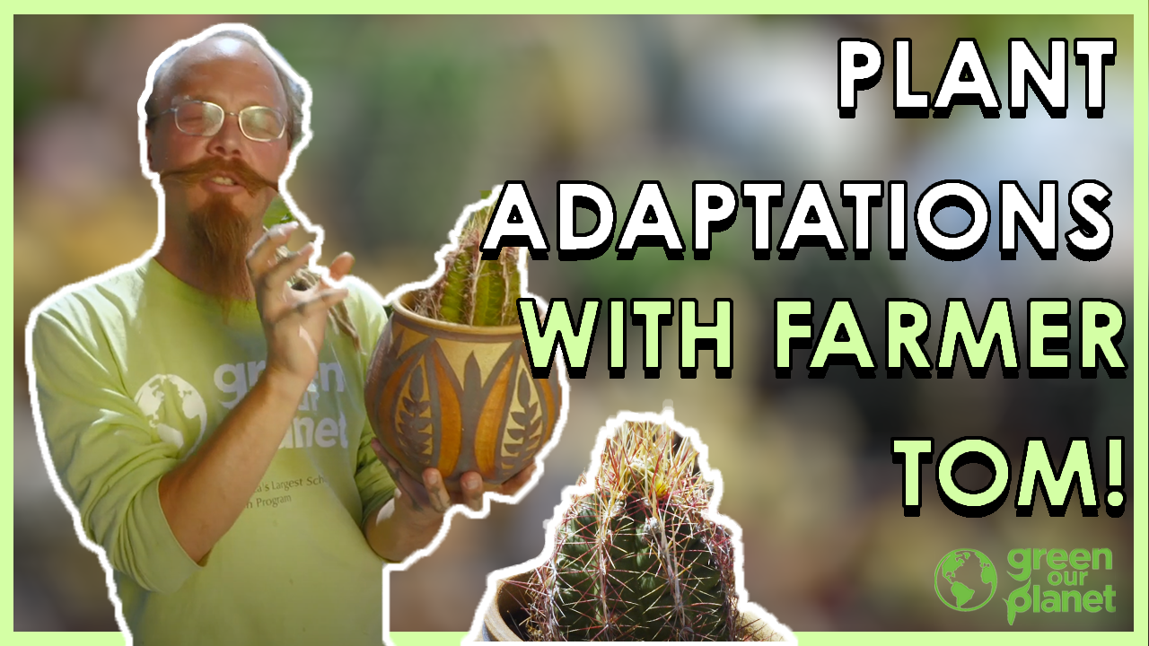 plant-adaptations-1