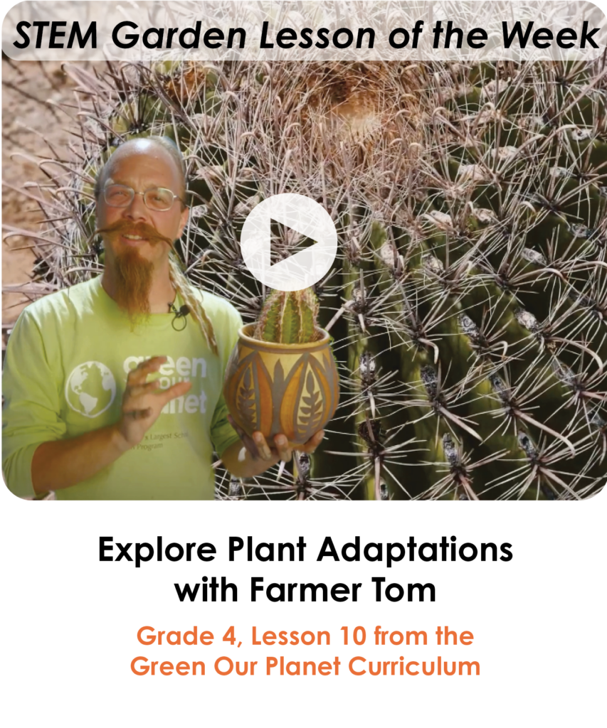plant-adaptations