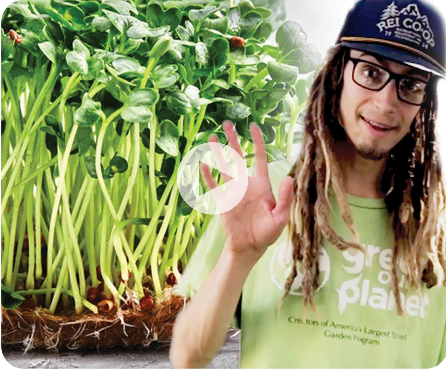 How Do You Sprout Seeds with Hydroponics Expert Travis - WEBSITE