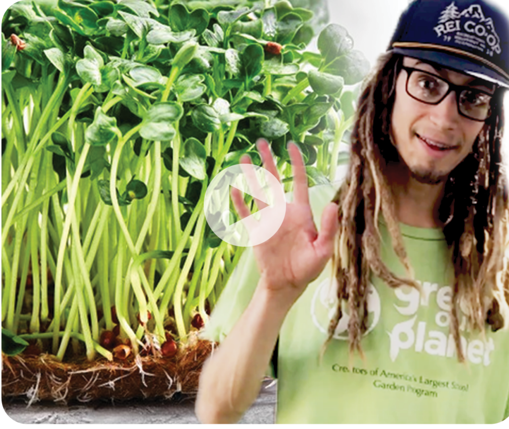 How to Build a Deep Water Culture Hydroponics System - WEBSITE