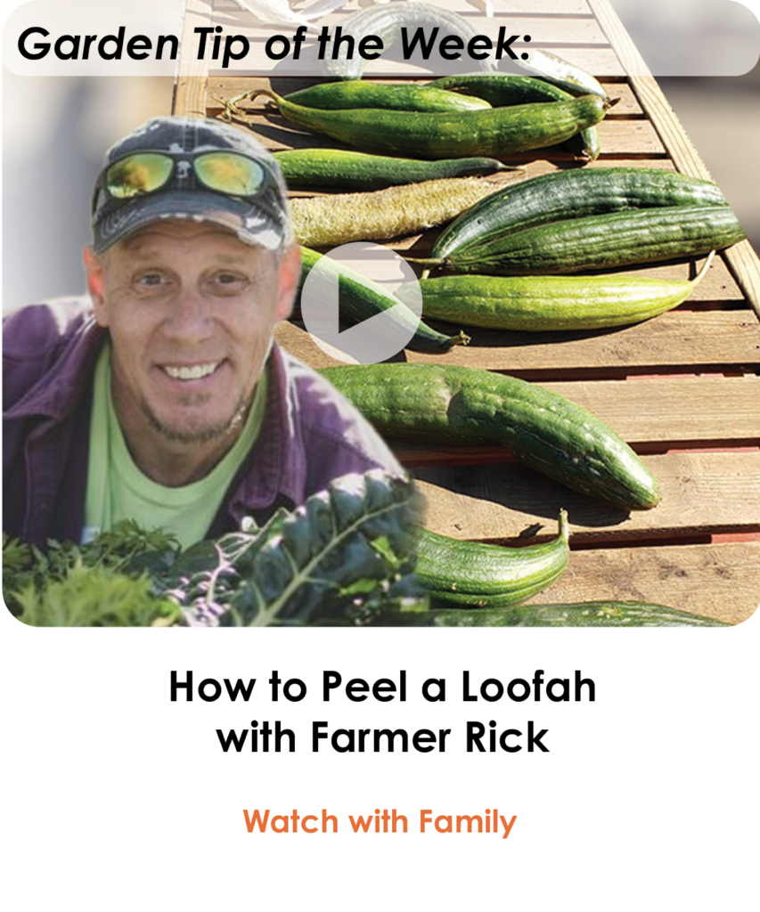 How to Peel a Loufa with Farmer Rick-newsletter