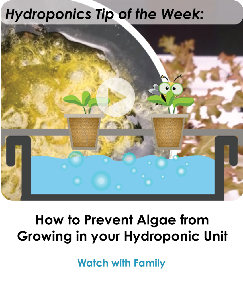 How to Prevent Algae from Growing in your Hydroponic Unit-NEWSLETTER