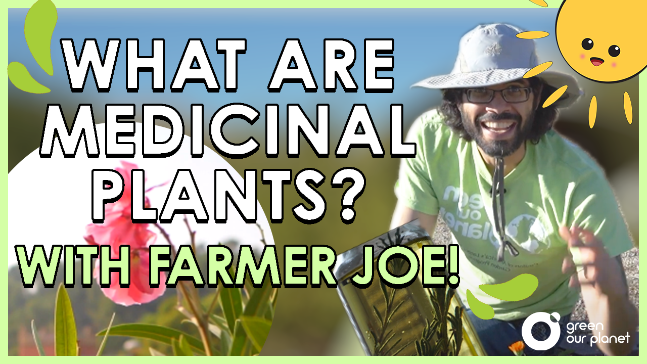 What Are Medicinal Plants with Farmer Joe