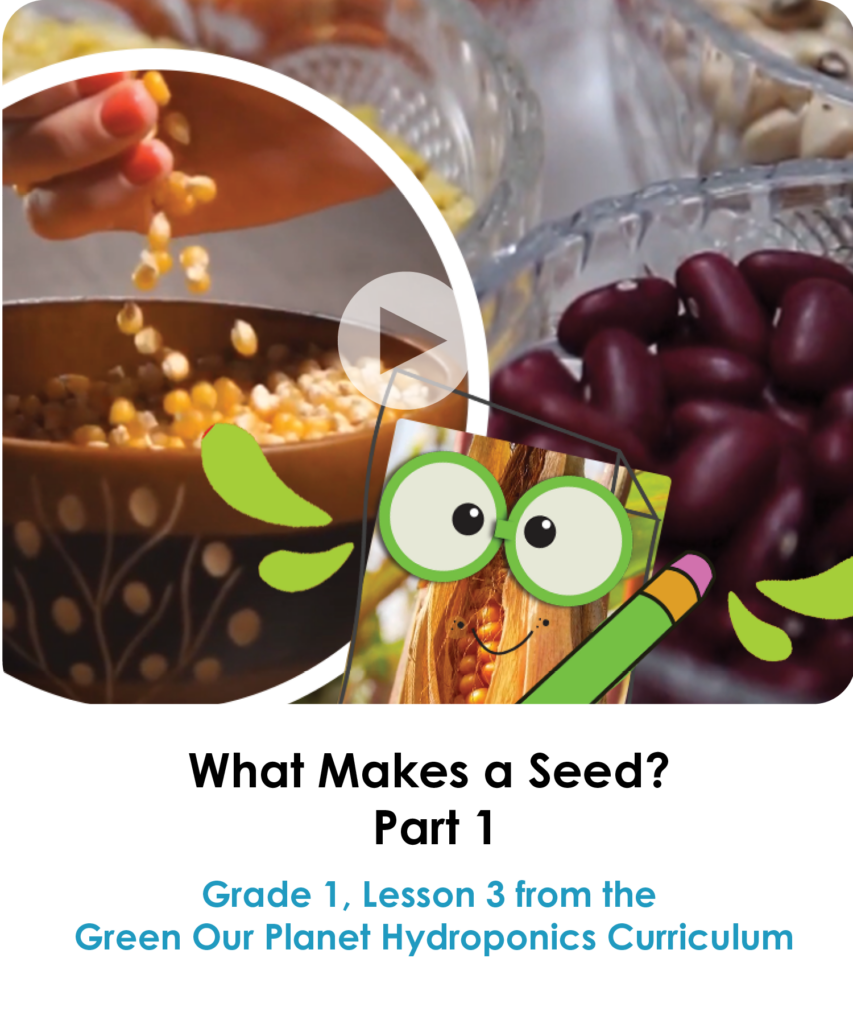 What Makes a Seed Part 1 - WEBSITE