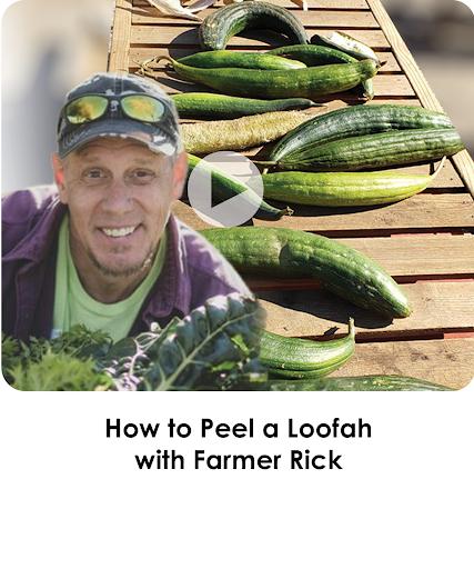 How to Peel a Loofah with Farmer Rick