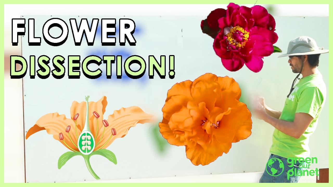Flower Dissection Grade 3, Lesson 3